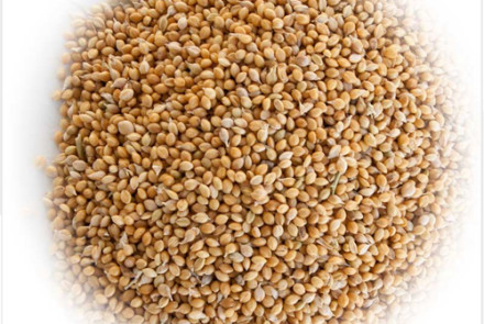 golden-german-millet copy