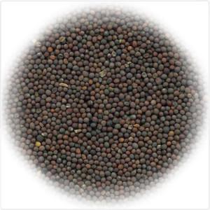 Горчица черная | Мобильная Очистка Зерна